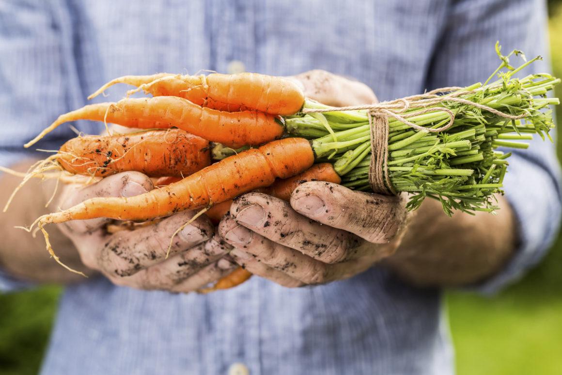 Für ein resilientes und nachhaltiges Ernährungssystem