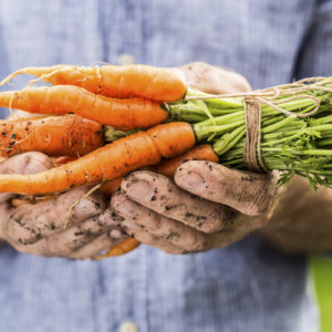 Towards a resilient and sustainable food system